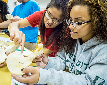 Skilled collaborators - students in our physical anthropology lab